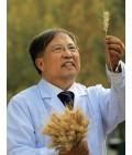 茹振钢——河南科技学院教授